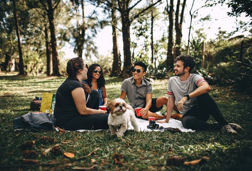 Dog training in a park with group of people