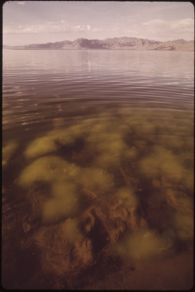 File:ALGAE GROWTH IN ONE OF THE SHALLOW BAYS OF PYRAMID LAKE NEVADA'S LARGEST NATURAL LAKE - NARA - 552917.tif