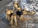 Стая бродячих собак загрызла насмерть жительницу Мордовии
