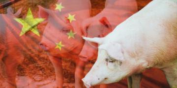Carne de cerdo para China: negociaciones para abrir mercado se reanudarían en agosto