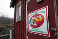 An organic dairy farm in Brookfield, Vermont, supplies Horizon Organic milk for the WhiteWave Foods Company.
