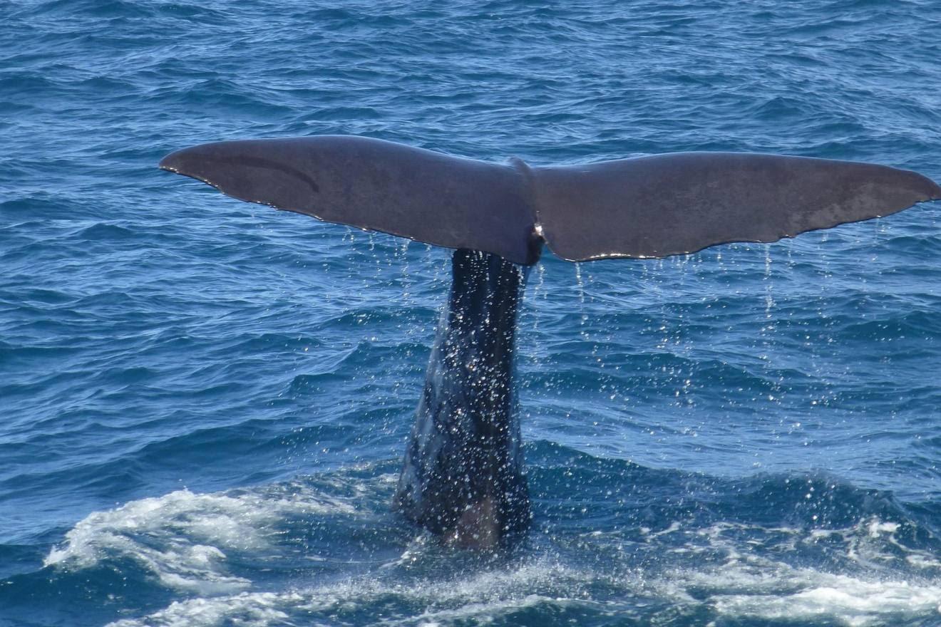 Proponen medidas para                                             disminuir las muertes de                                             cetáceos ocasionadas por                                             colisiones