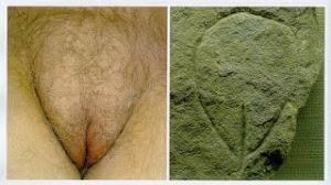 Detalle anatómico de vulva y grabado de la cueva de Le Nanchard en Francia