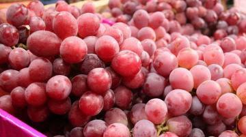 Perú exportaría 62.5 millones de cajas de uva en la campaña 2021/2022