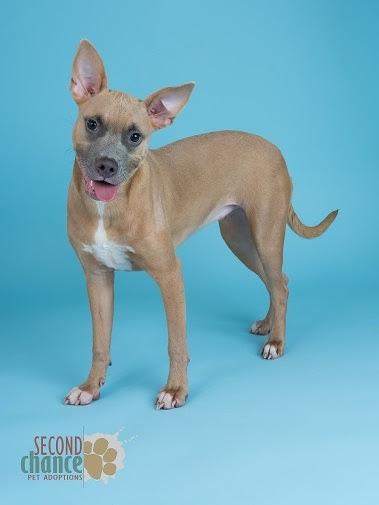Ms. Beasley adoption profile photo