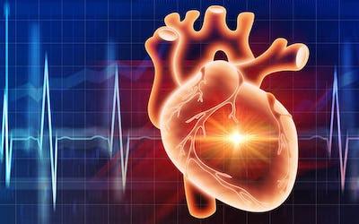 Diagnosing Cardiovascular Disease