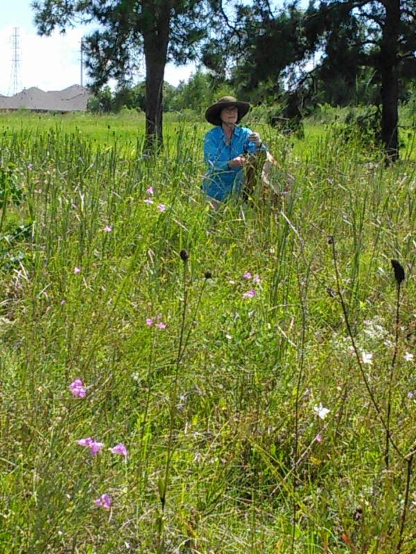 Seed Collecting at Deer Park Prairie