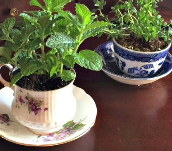 DIY Gift for Mom Teacup Garden