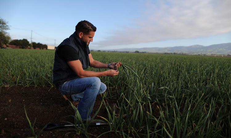 Ken Christopher tại cánh đồng tỏi của gia đình tại thành phố Gilroy, bang California, Mỹ hôm 29/3. Ảnh: Reuters.