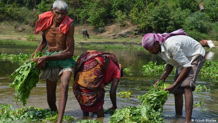 People wash vegetables in the water (photo: Ashish Birulee)