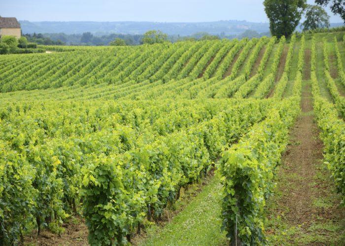 Château Pascaud vineyard - producer of Bordeaux Supérieur 2018