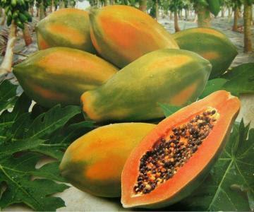 Perú produjo más de 186 mil toneladas de papaya en 2020