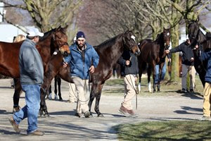 A strong Keeneland January Mixed Sale kicked off 2019
