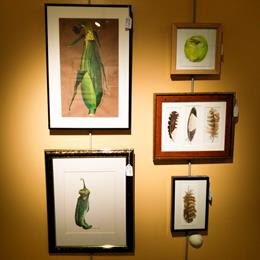Framed watercolor paintings of corn on the cob, chlli peppers, an apple and feathers