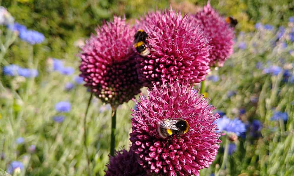 How readers have been helping wildlife in their gardens