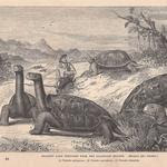 The Norwegian Who Knew His Tortoises So Well That He Changed the Course of History