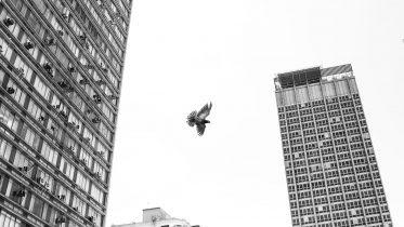 Bird Downtown