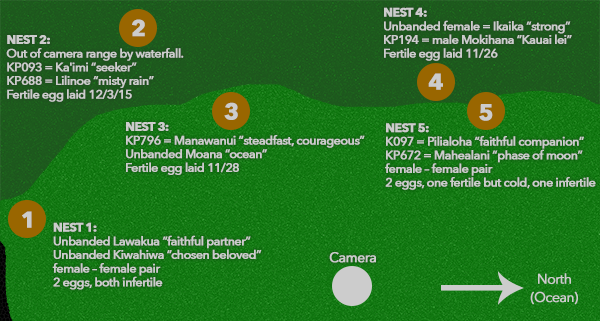 2016 Albatross Nest Map