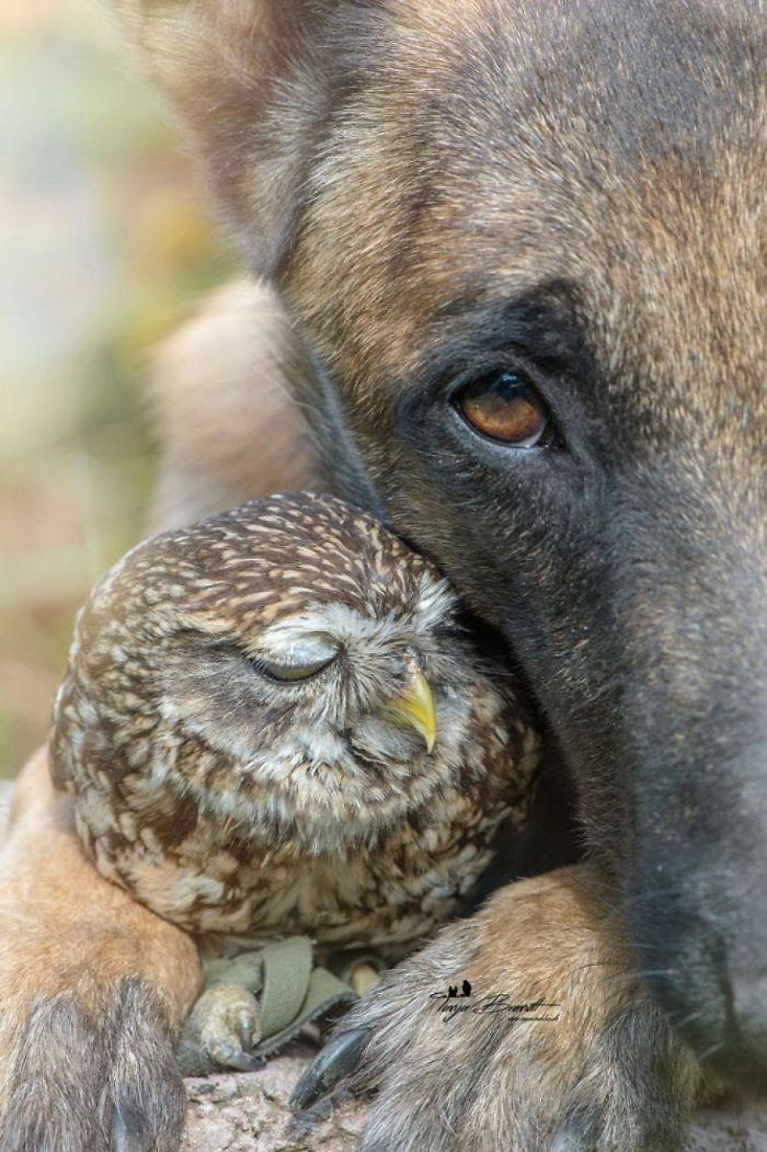 Ingo The Dog And His Owl Friend