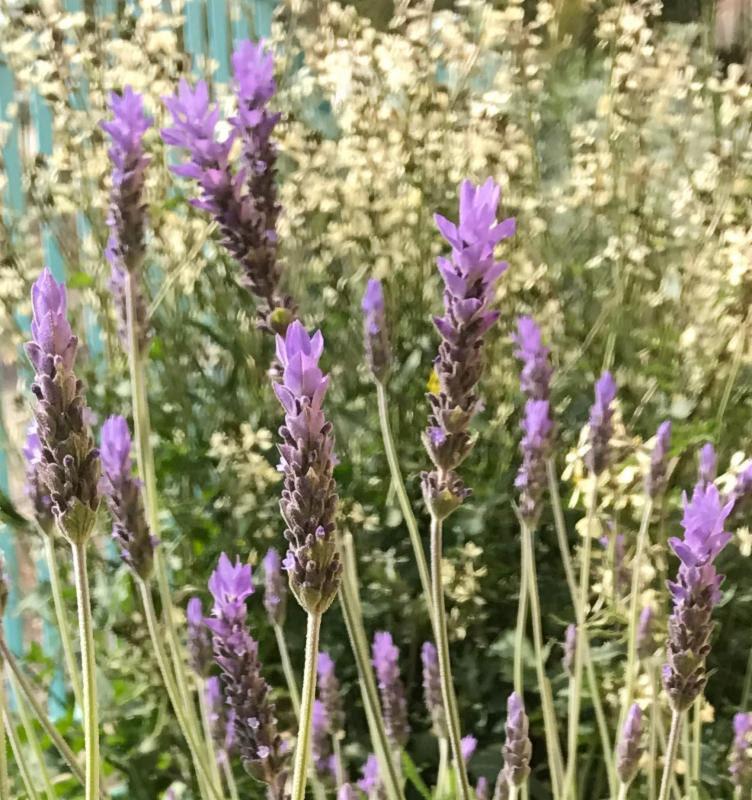 Galilee Flowers