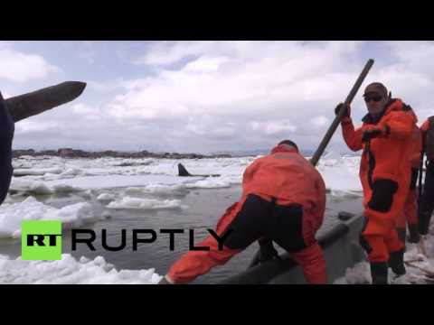 Volunteers Save Stranded Orca In British Columbia Hqdefault