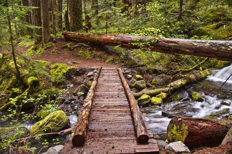 Olympic National Park has tons of great hiking trails.