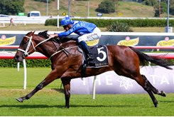 Winx wins the Apollo Stakes at Randwick