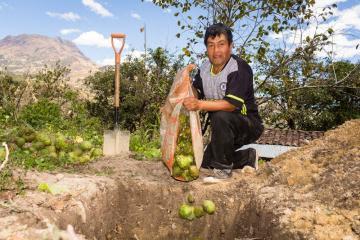 Sinergia para erradicar las moscas de la fruta revalorará la producción de chirimoya en el valle Alto Jequetepeque