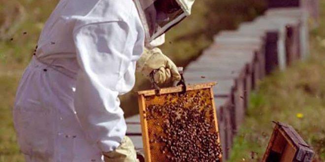 apicultura-440x265