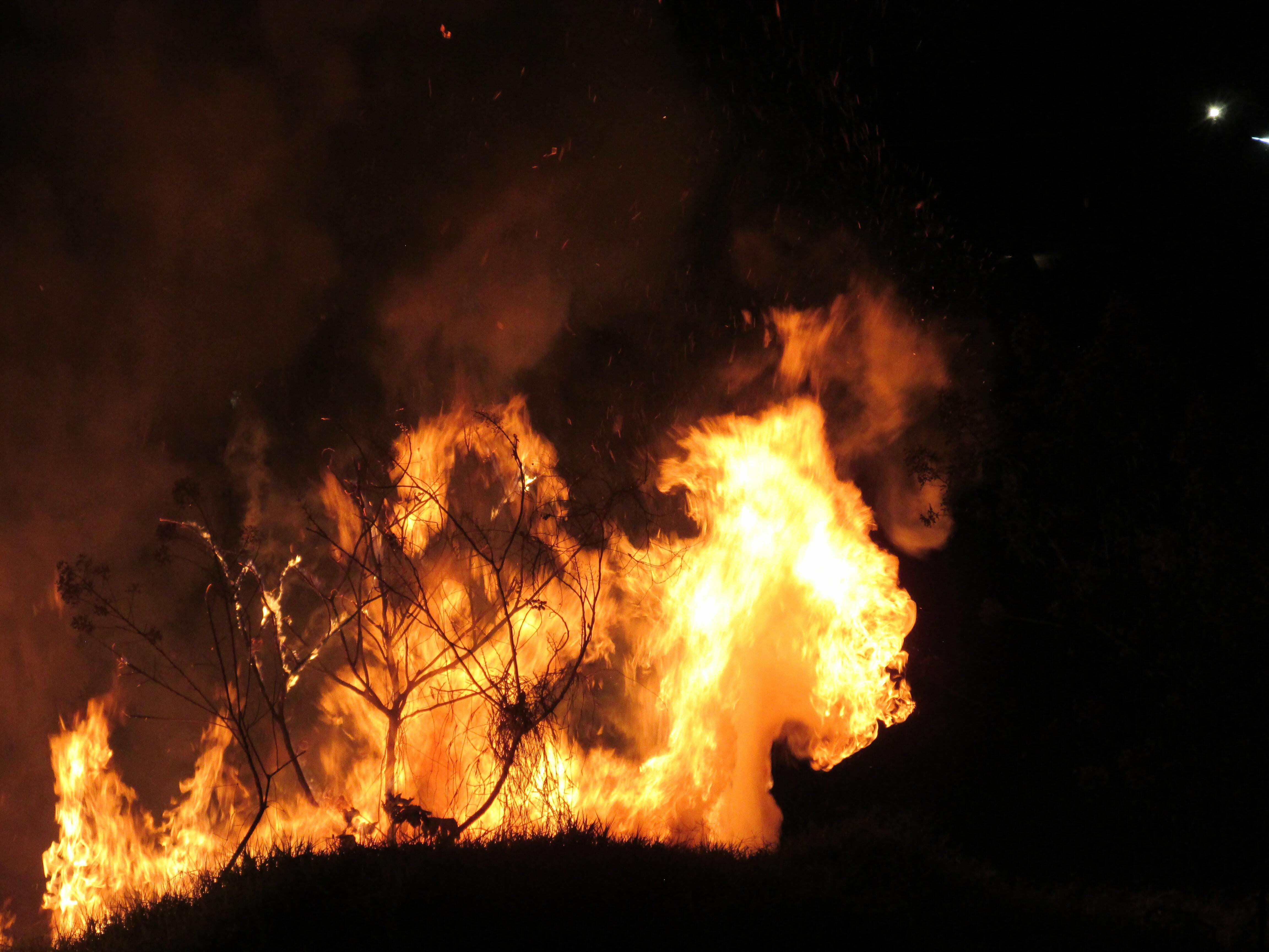 silhouette of trees in night fire
