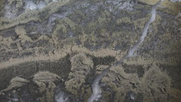 Pyritized Stromatolites