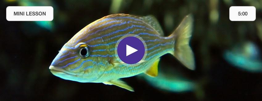 Mystery Doug Fish