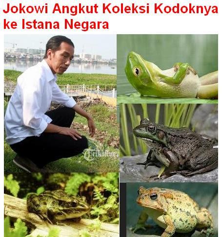 Jokowi dan Kodok