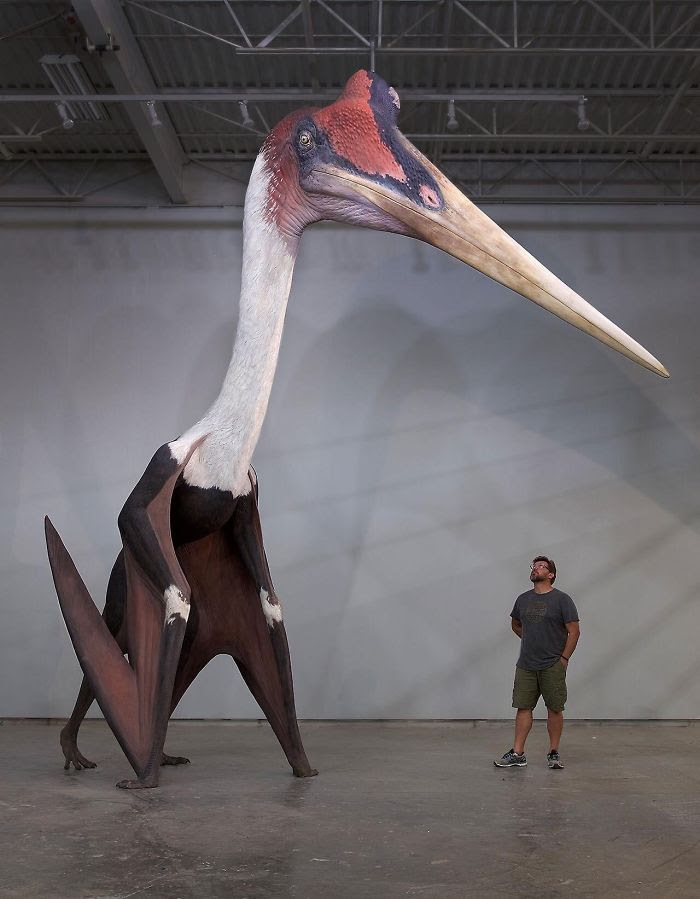 Quetzalcoatlus Northropi Model Next To A 1.8m Man. The Largest Known Flying Animal Ever Exist