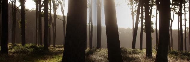 L'ouvrage le Chêne en majesté propose de découvrir tous les métiers permettant de produire une barrique: forestier, acheteur de bois, bûcheron, merrandier… et tonnelier.