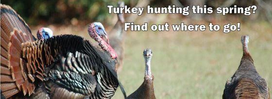 Where to turkey hunt