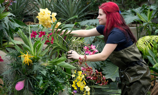 Kew horticulturalist installing the orchid festival