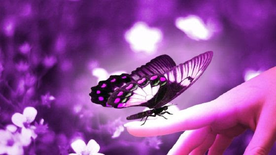 mariposa-violeta
