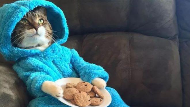 Image result for cat australia invitation cookie