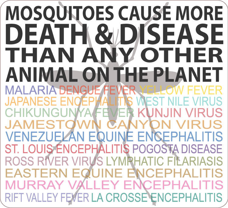 Infographic: Mosquitoes cause more death and disease than any other animal on the planet.