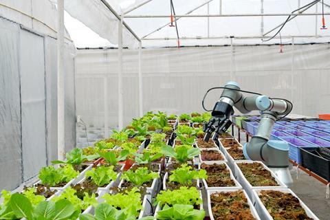 A robot works on vegetable plots