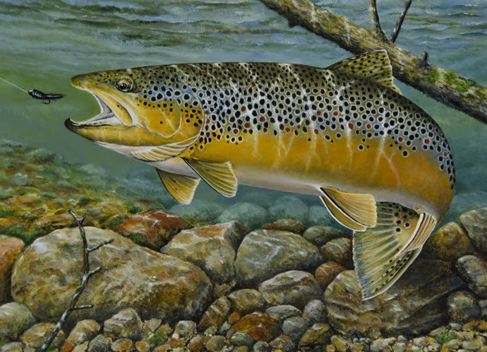 trout stamp2