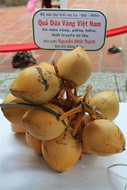 dừa vàng