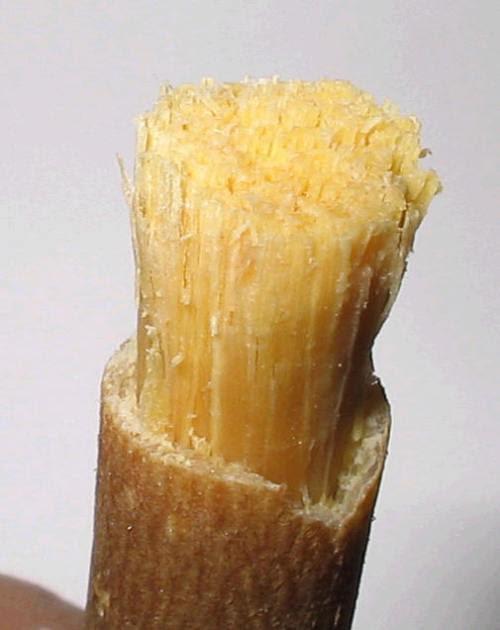 أجمل و صفة طبيعية لتبييض الأسنان Miswak-brush77