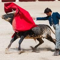 CORRIDAS, COMBATS DE COQS : ALERTE ! MOBILISATION GENERALE URGENTE !