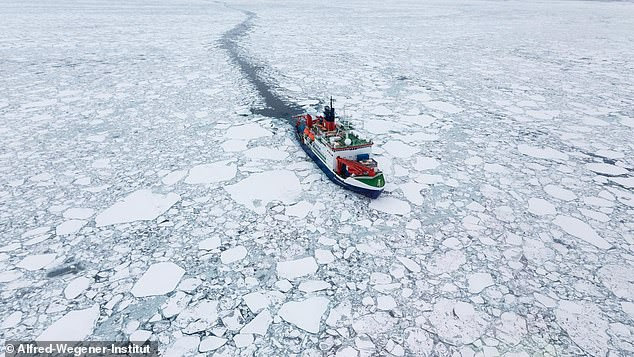 Concerning: Sea ice in much of the Arctic may be thinning twice as fast as previously thought, scientists fear. The research vessel Polarstern is pictured drifting in Arctic sea ice