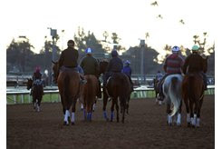 Horses train at Santa Anita Park