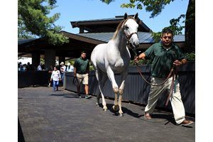 The session-topping Tapit colt heads to the ring at the Keeneland September Sale