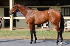 The filly by The Big Beast consigned as Hip 302 at the OBS March Sale