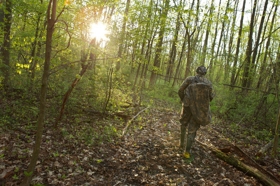 A hunter wearing camo walks into a green forest.